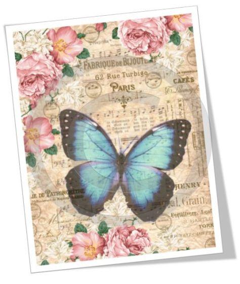 mariposa paris.jpg