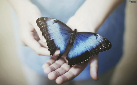 mariposa-azul,-compartida por mariposaazuldeluz